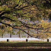 27日の散歩 ( 御所往復で秋便り )