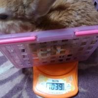 術後1ヶ月経ちました。体重計りました。