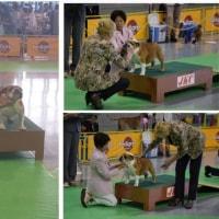 マドンナ 6月21日FCI 北陸甲信越インターナショナルドッグショー