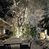 京都は大雪‼️