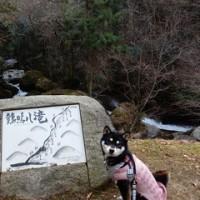 チャロ 2回目の家族記念日 独占お出かけ 2 (滝&公園)