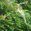 野の花色々(2)