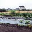 二代目家庭菜園2   11840