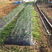 3月25日・畑Eの草取り作業を継続!