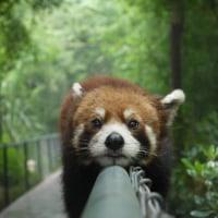 動物癒しの森   画像1回目