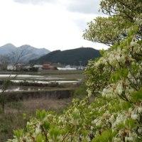 山野草の季節(2)