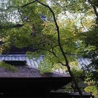 20日の散歩 ( 大徳寺、船岡山から十二坊への散歩で秋探し )