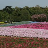 館林 トレジャーガーデンの芝桜2017