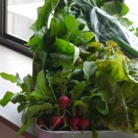 地場の野菜