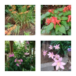 7月の花く7