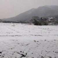 「続く雪」