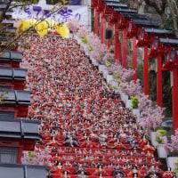 ちゃことドライブ~  勝浦雛祭りヽ(´∀`)ノ .:。+゜。