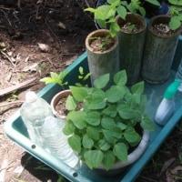 山を焼き、薬用木と染料の苗を移植した [友愛の森/里山再生プロジェクト<2>]