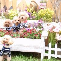 DOG SMALL GARDEN koniwan (福生市)☆