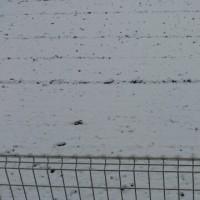 11/24 初雪