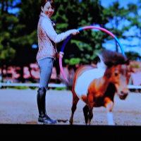 4/24 このポニーをいじめる大きな馬は1頭だけだった