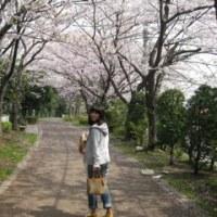 桜の季節もそろそろ終わり。。。