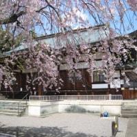 桜 <> 寺
