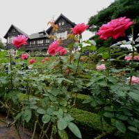 「旧古河庭園」 「秋のフェスティバル」