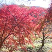 各務野自然遺産の森の紅葉②