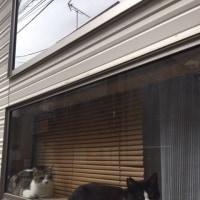 猫のいるシェアハウス 猫入りました~!