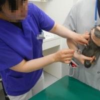 子猫2匹の治療