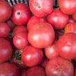 やっぱり今年は失敗の大玉トマト