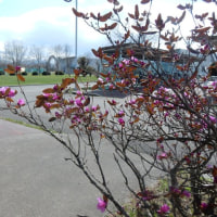今度こそ春到来
