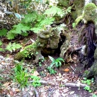 玉原湿原・ブナ平のブナ地蔵