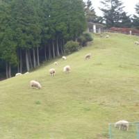 秋の六甲山牧場