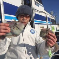 25日カワハギ釣果