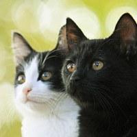 「猫なんかよんでもこない。」、猫好きのための猫の映画。