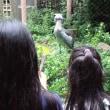 動物園と秋葉原