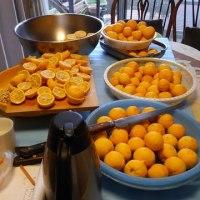 今年最後の柚子甘酢漬け作りを頑張りました。一日中柚子を触っていました。