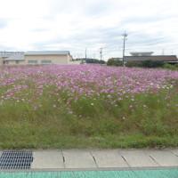 今日の風景 ~ autumn 編-2