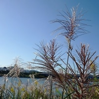 秋 揖保川下流にて・・・