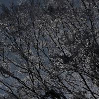 secret talk30 凍夜の森―dead of night