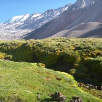 凡さんの山歩き 南米チリ エル・プロモ峰 3000mの植物