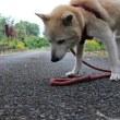 愛犬まるの飼主の不思議な出会い