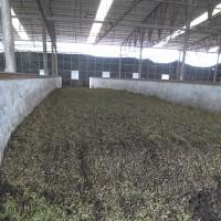 枝豆が堆肥になる