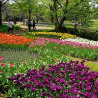 昭和記念公園が色彩の豊かな季節になりました その2