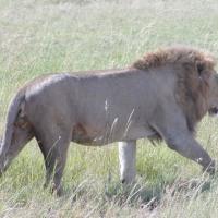 セレンゲティ国立公園(タンザニア)⑤