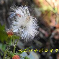 2016/12/02 三石山738m⇒杉村公園