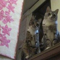 兄弟猫が揃って階段上♪