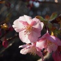 福岡市植物園を出ます