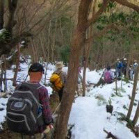 15 鈴ヶ峰・鬼ヶ城山(320・282m:西区)縦走登山  桧林に