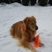 木曜日大好き。雪もちらつきますが、元気に遊びます。