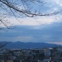 復活・・・朝の散歩