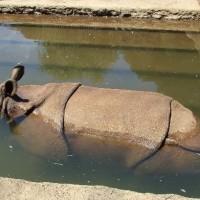 多摩動物公園へ。タスマニアデビルに会えた。
