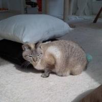 猫の日のジョニ